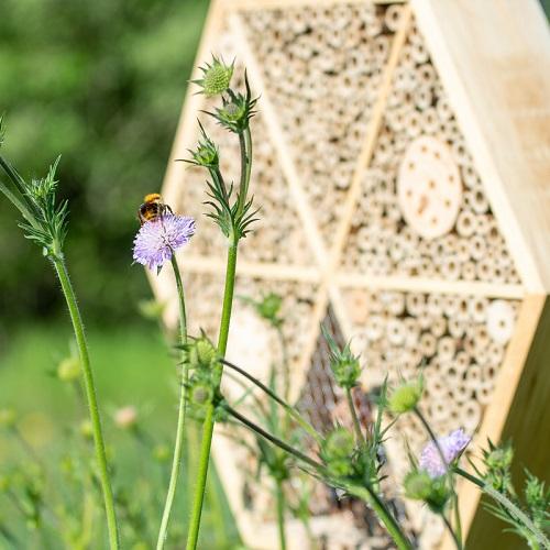 Tips voor het ophangen van een insectenhotel