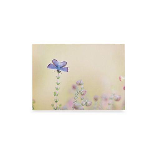 Wenskaart icarusblauwtje