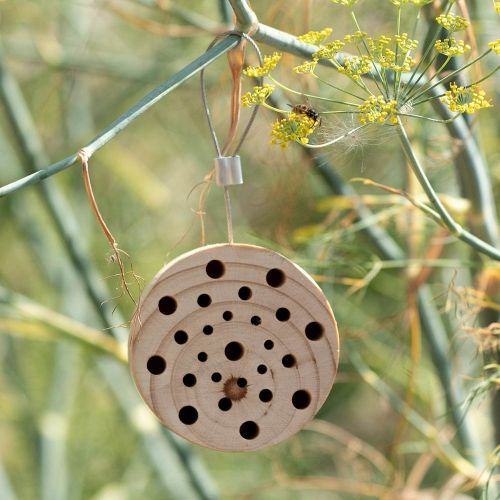 Insectenblok Gorgona