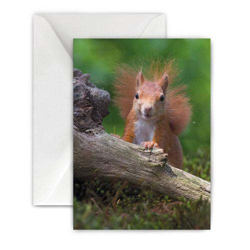 wenskaart eekhoorn
