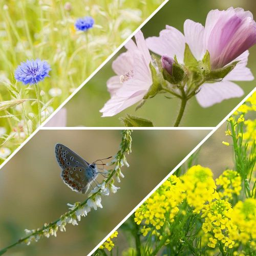 Zadenmix voor vlinders