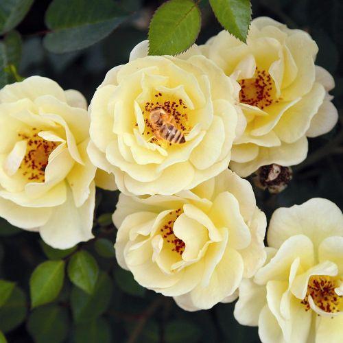 Bijenweelde Geel